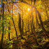 Sunburst Through Smugglers Notch Forest