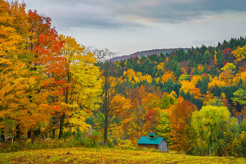Cabin In Autumn Woods