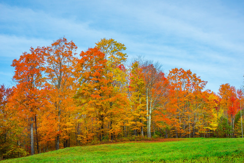 A Wall Of Color Out In The Meadow