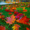 From The Perspective Of Fallen Leaves