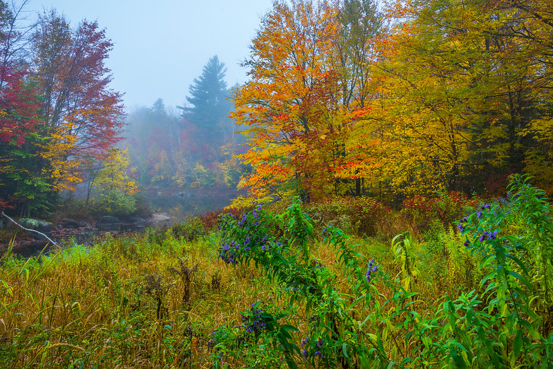 A Mix Of Seasons In Mist