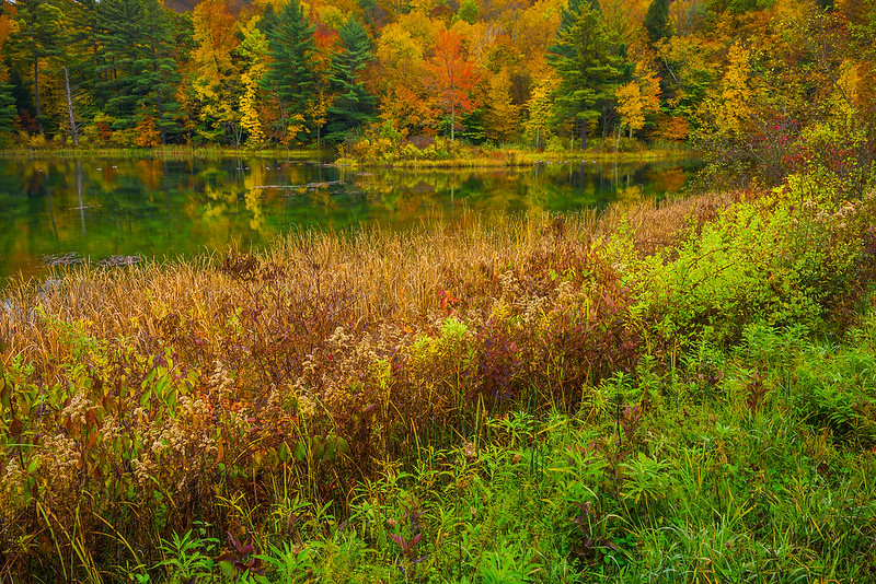 Autumn Color Next To Still Pond