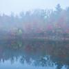 Morning Mist Break At The Pond