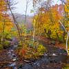 An Hidden Secret Runoff Of Autumn