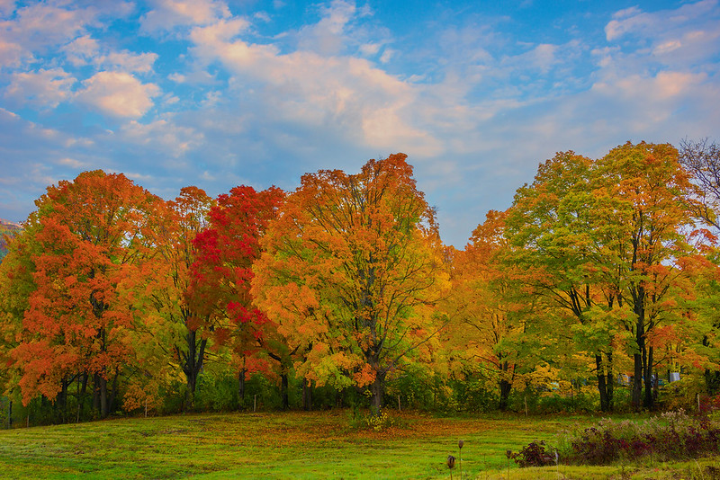 Stunning Stand Of Autumn Trees In Early Light