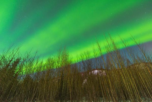 Across The Sky In Green -Chena Hot Springs Resort, Outside Fairbanks, Alaska