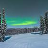 Framed Between A Group Of Trees -Mt Aurora Skiland, Fairbanks, Alaska