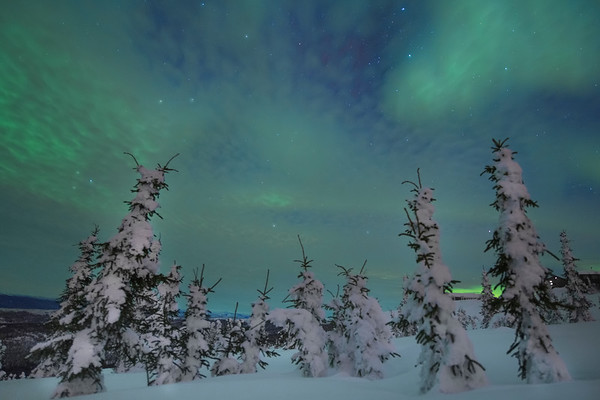 Snow Covered Trees Under The Green Magic - Mt Skiland, Fairbanks, Alaska