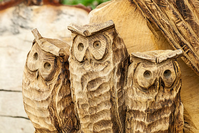 Three Wise Owls