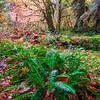 Misty Autumn Morning In The Hoh - Hoh Rainforest, Olympic National Park, Washington Olympic National Park, Washington