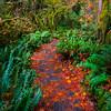 Autumn Trails - Hoh Rainforest, Olympic National Park, Washington