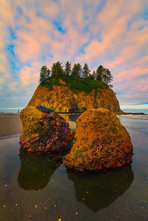 Starfish Rocks - Second Beach, Olympic Peninsula, Olympic National Park, WA -
