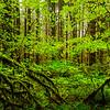 Framed In Green - Hoh Rainforest, Olympic National Park, Washington
