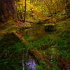 Fall Creek In The Hoh Rainforest - Hoh Rainforest, Olympic National Park, Washington
