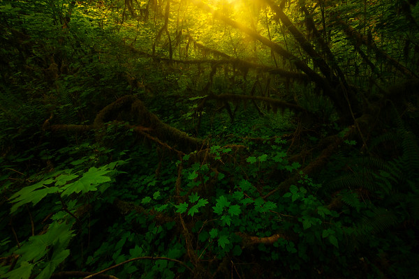 Inside The Rays Of Light Within The Rainforest