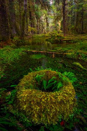 Dress in Rainforest Colors - Hoh Rainforest, Olympic National Park, Washington