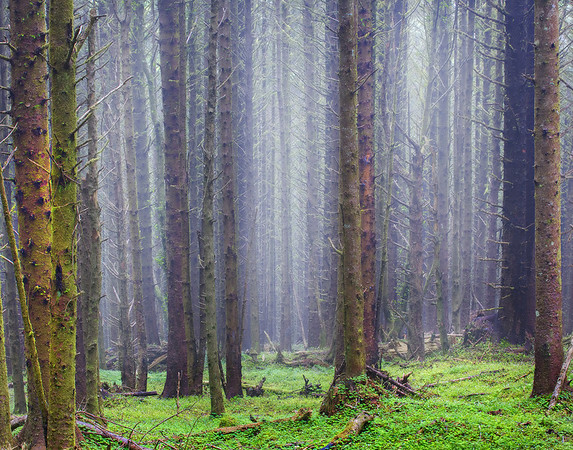 Oregon Coast, Oregon Stock Images_36