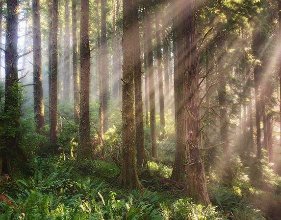 Oregon Coast, Oregon Stock Images_5