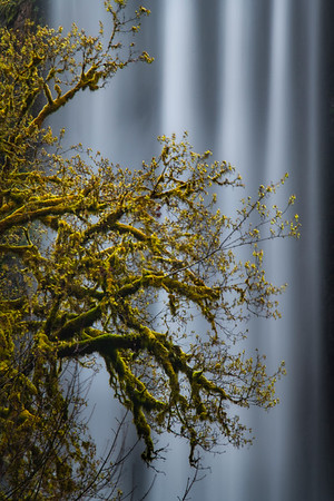 Abstract Spring Moss In Front Of Golden Falls - Golden and Silver Falls State Park, Coos Bay, Oregon Coast