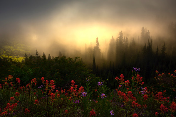 Sun Breaking Through Above The Fog - Mount Rainier National Park, WA