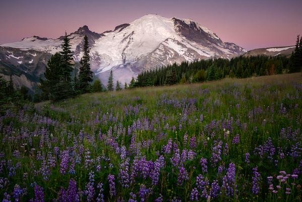 Mt Rainier In Tight From Sunrise Side - Mount Rainier National Park, WA