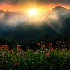 Sunrise Glory From The Top - Mount Rainier National Park, WA