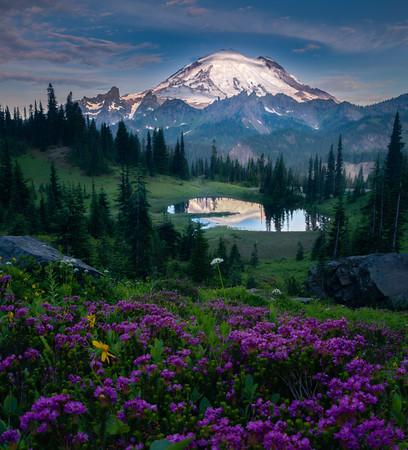 Tipsoo Morning Light And Pink Heather - Mount Rainier National Park, WA