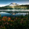 Reflection Lake With Spirea Flowers In Foreground - Mount Rainier National Park, WA