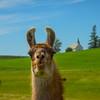 The Lama And Freeze Church - The Palouse, Western Idaho