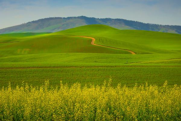 A Mesh Of All Colors -The Palouse, Eastern Washington And Western Idaho