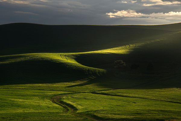Leading Lines Into The Rolling Hills - The Palouse Region, Washington