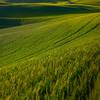 Rolling Steps Into Steptoe Butte -The Palouse, Eastern Washington And Western Idaho