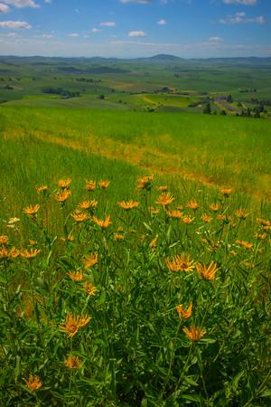 The Top Of Idaho -The Palouse, Eastern Washington And Western Idaho