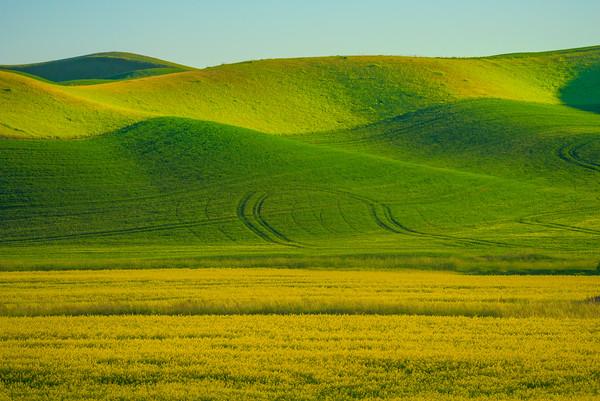 Layers Of Canola And Peas -The Palouse, Eastern Washington And Western Idaho