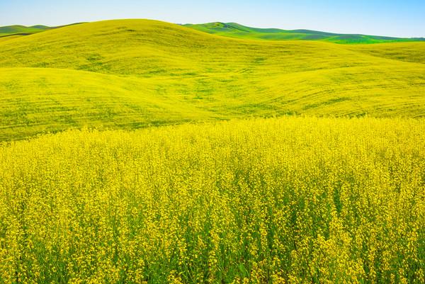 Owner -The Palouse, Eastern Washington And Western Idaho