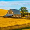 Barn On Side Hill In Harvest Season _The Palouse_Eastern Washington
