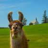 The Lama And Freeze Church_Vertical - The Palouse, Western Idaho