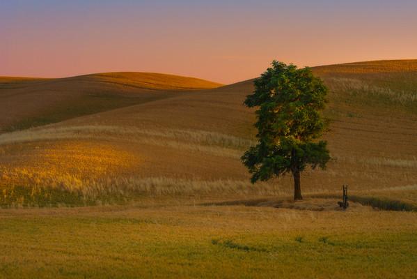 The Lone Tree In Last Light