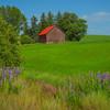 Framed In Purple -The Palouse, Eastern Washington And Western Idaho