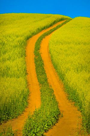 Back Roads Of Canola -The Palouse, Eastern Washington And Western Idaho