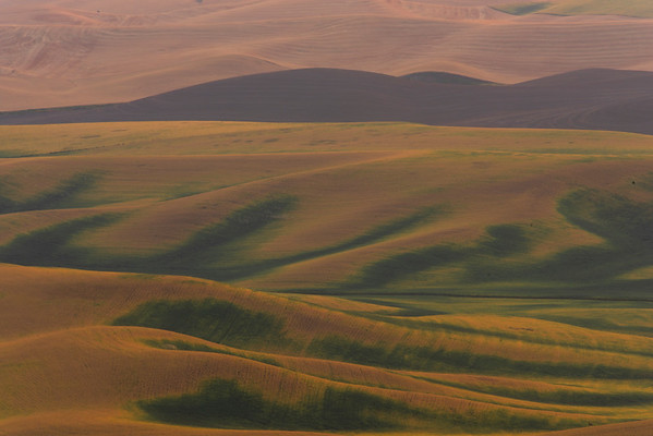 Mixtures Of Green And Yellow From Steptoe - Steptoe Butte State Park, Palouse, Eastern Washington