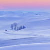 Palouse Stock Palouse Stock 25