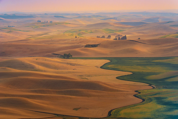 The Iconic Brocoli Tree - Steptoe Butte State Park, Palouse, Eastern Washington