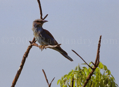 Birds & Insects - Kruger Park - South Africa - ©Rawlandry