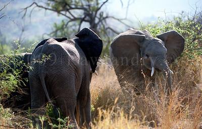 Elephant-WILDLIFE-AFRICA-Pilanesberg-2008-9798-15