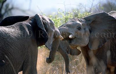 Elephant-WILDLIFE-AFRICA-Pilanesberg-2008-9798-17