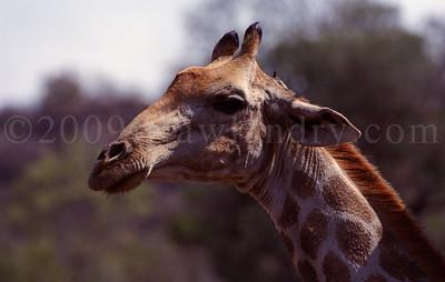 Pilanesberg Park - South Africa - ©Rawlandry