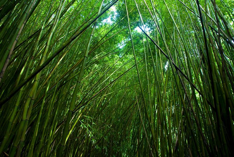 Hana - the bamboo forest skyline on the way to Waimoku Falls