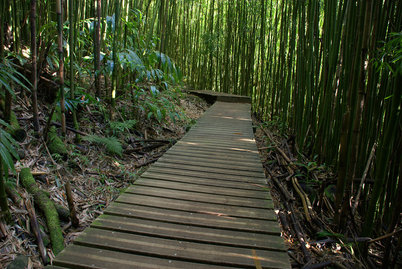 boardwalk in bamboo L