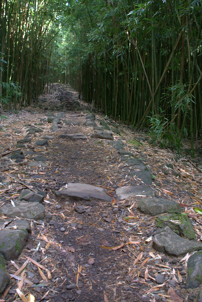 bamboo forest trail 3